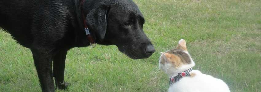 ペット同士の喧嘩で大怪我!法的にはどうなる?